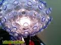 feria-liber-arte-artevivo-marylin-lampara-de-botellas-de-plastico-nueva