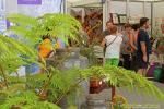 Feria de Artesania Bajada de La Virgen 2105 00000